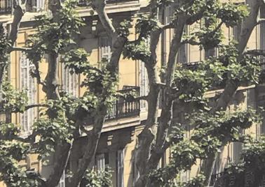 visuel de l'événement l'arbre et la cité