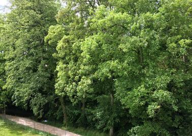 Espace vert Versoix mai 2020