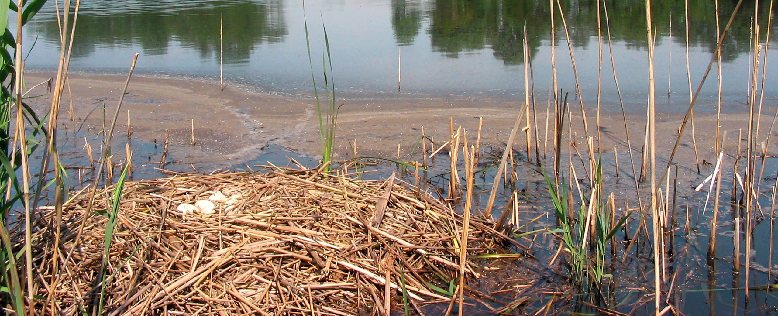 Impact des changements climatiques sur les écosystèmes et les espèces