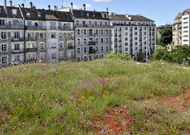 Photo toiture végétalisée HEA